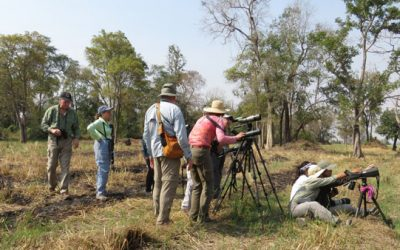 Top 8 Tips for Birding in Cambodia