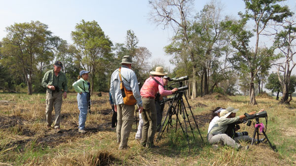 Birding in Cambodia: Top 9 tips to birding in the Kingdom