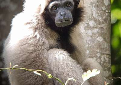 Endangered Primates and Forest Trekking