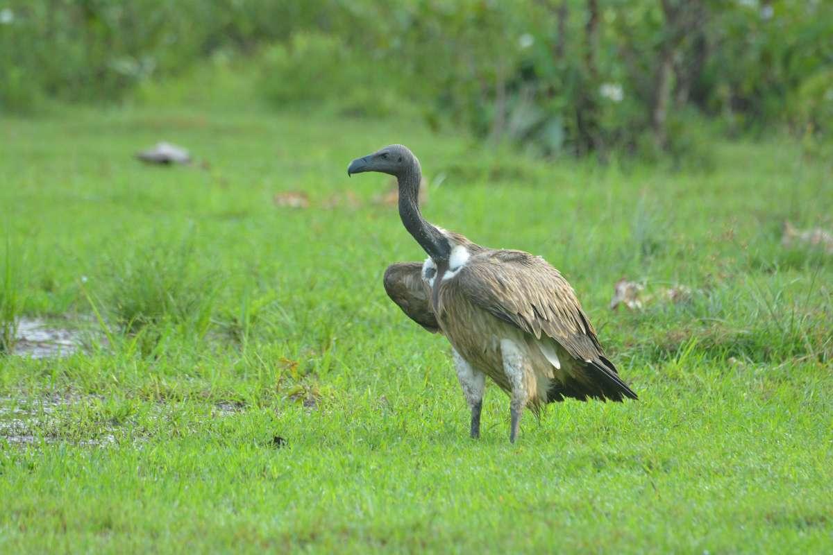 Best Best Ancient Temples for Birding In Cambodia : Prey Veng