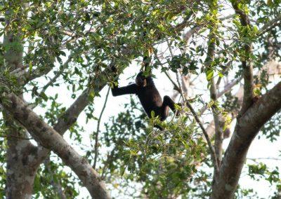 Jahoo Gibbon Camp Experience