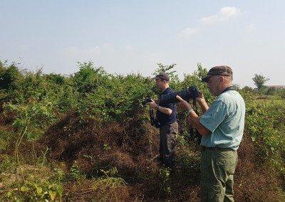 Cambodian Tailorbird Site (Phnom Penh)