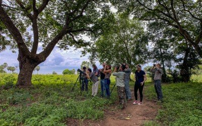Birdwatching in Phnom Penh: A New Birding Experience for City Dwellers