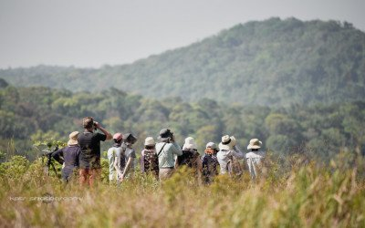Birding at Bokor National Park