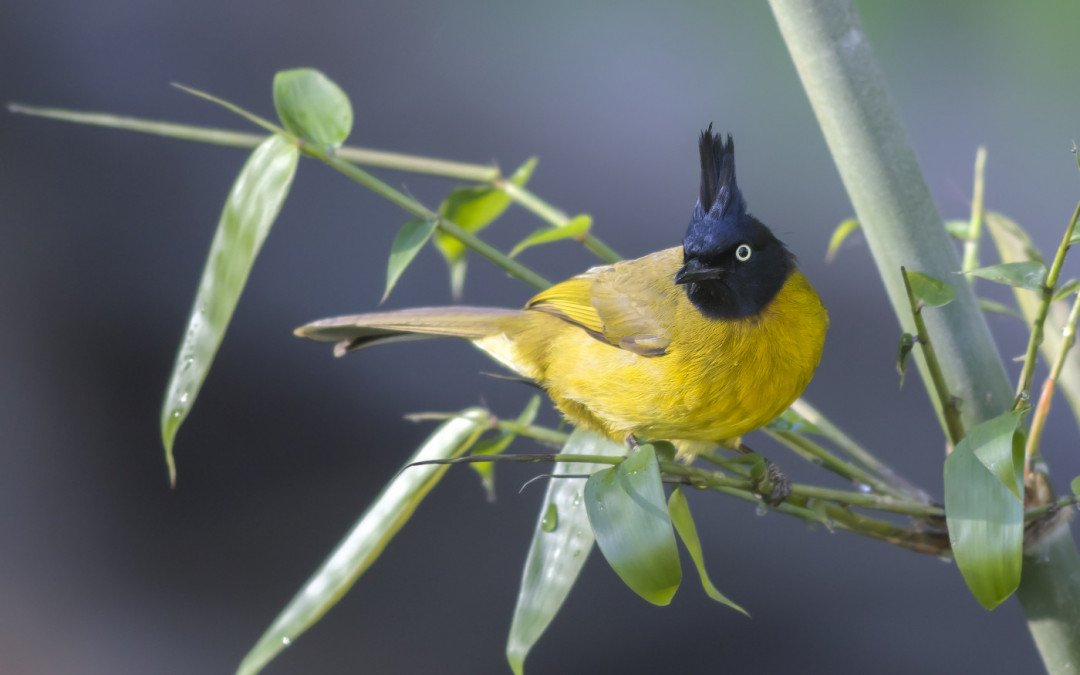 Top 10 Birds around Bokor National Park