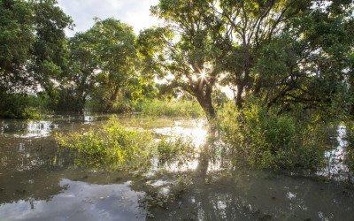 Highlights of the Tonle Sap Floodplains